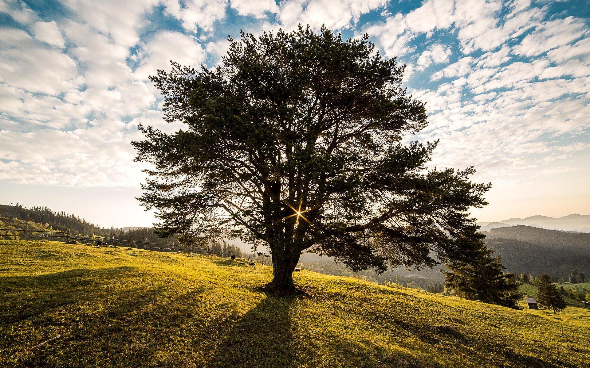 Baum auf Wiese. Quelle: danfador/Pixabay